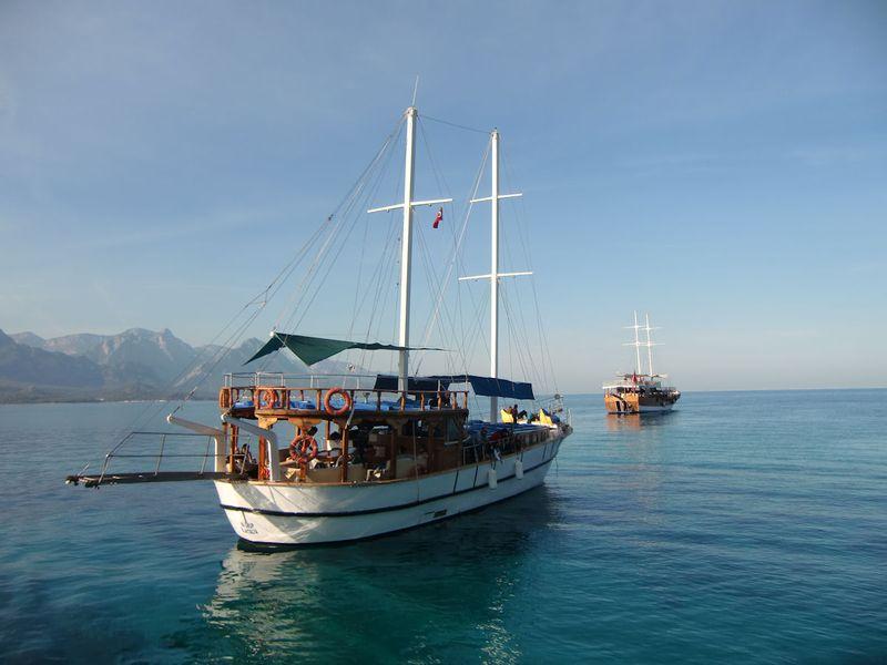 Palm - Sea